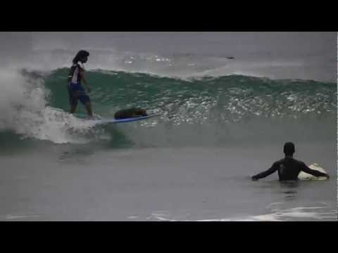 Mateo the surfing puppy dog gets big barrel in Tamarindo, Costa Rica