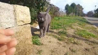会社近くの公園の野良猫を少しでも減らすため保護し不妊手術して里親募...