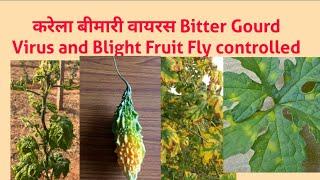 Bitter Gourd Diseases Karela Virus & करेला वायरस ब्लाइट रोग का नियंत्रण కాకర వైరస్.YK Laboratories