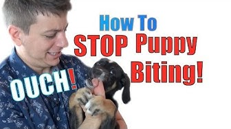 How to Train a Puppy NOT to BITE