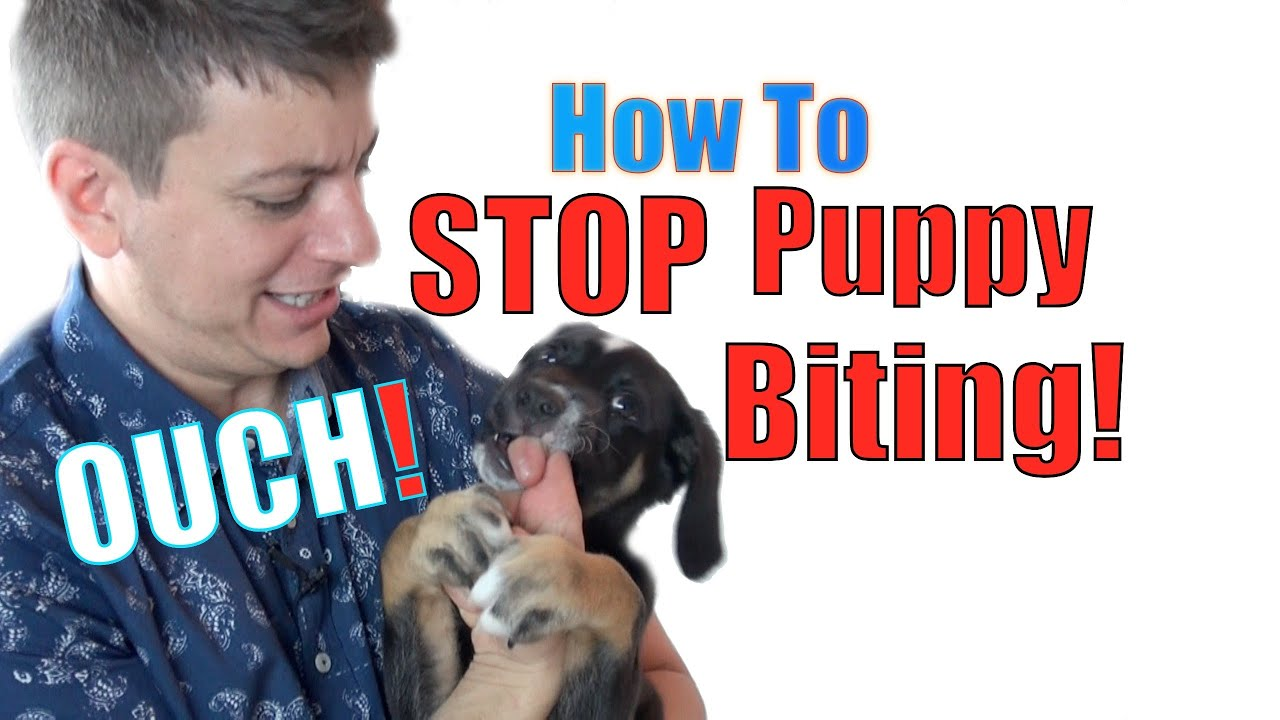 How to teach a puppy to the toilet 19