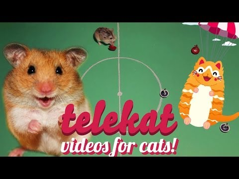 Cute hamster video for cats to watch! Telekat: TV for smart cats