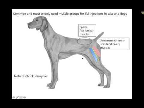 Clinical Applications Musculature (VETERINARY TECHNICIAN EDUCATION VIDEOS)