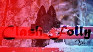.:Clash Folly:. Groenendael  1 Year ~Bonfire Heart~