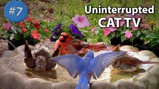 7. Cat TV  Birds Bathing & Drinking water in a Birdbath  NO ADs Interrupting #CATTV