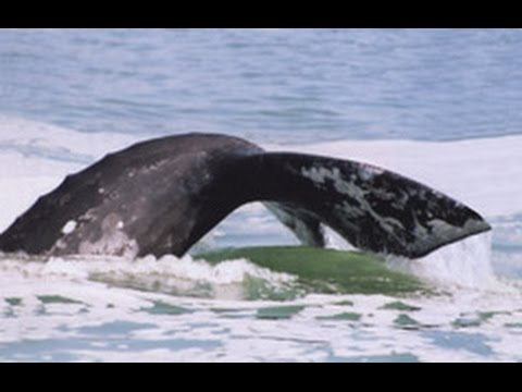 March 27, 2017 Spring Whale Watching at the Depoe Bay Whale Watching Center (Oregon)