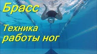 Техника ног брассом/ КАК НАУЧИТЬСЯ ПРАВИЛЬНО ПЛАВАТЬ/ How to learn to swim/ Плавание для каждого