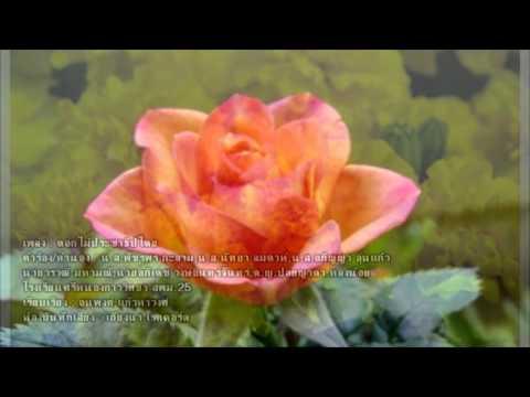 ดอกไม้ประชาธิปไตย - โรงเรียนศรีหนองกาววิทยา สพม.25 【OFFICIAL AUDIO】