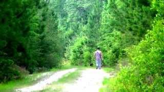 Deer Dog Training With Footage Of Deer Crossing