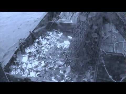 петропавловск камчатский морская рыбалка