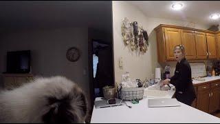 Best New Puppy Surprise Reaction!!!