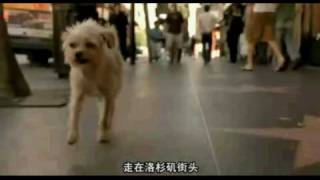 The Dog Problem - Walking in L.A.