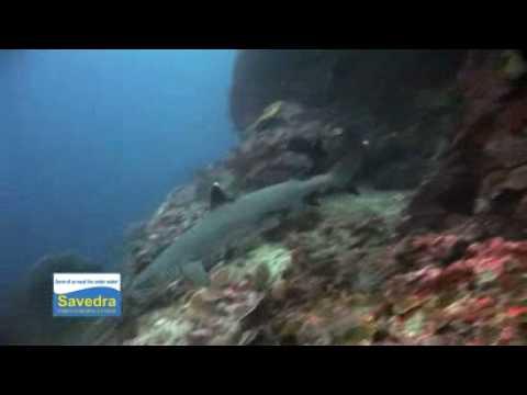 Scuba Diving Pescador