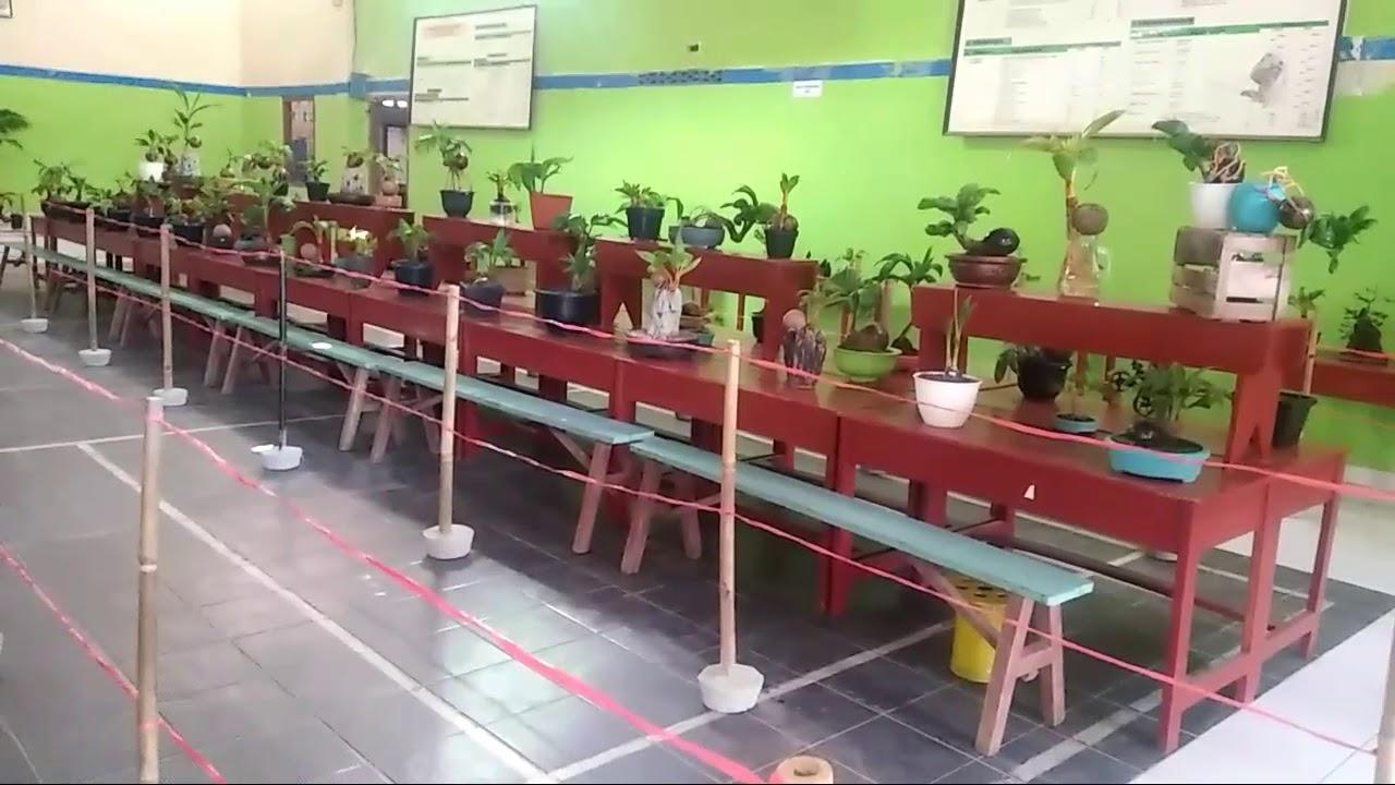Pameran Bonsai Kelapa Di Untoro Lampung Youtube
