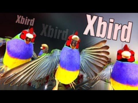 Xbird - Découverte [YoloKinoo] |