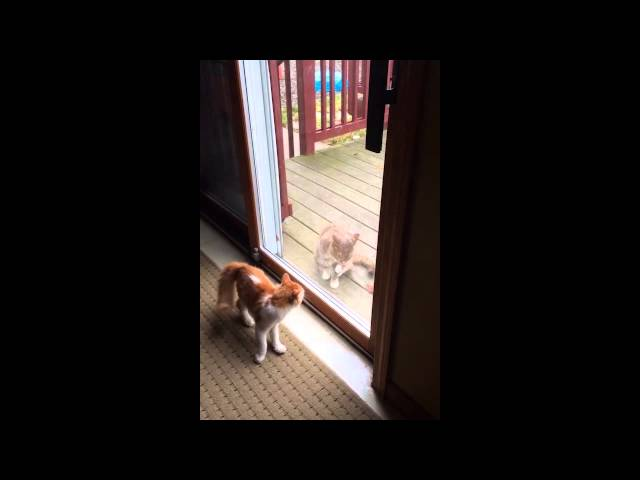 Cat Wants Attention But Other Cat Ignores Him
