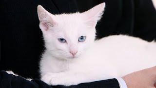 Happy National Cat Day! I Can Haz Cheezburger Promotes Cat Adoption | POPSUGAR News