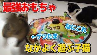 猫's どちらも保護団体から譲り受けた保護猫です。 たま(2018/5/1生ま...