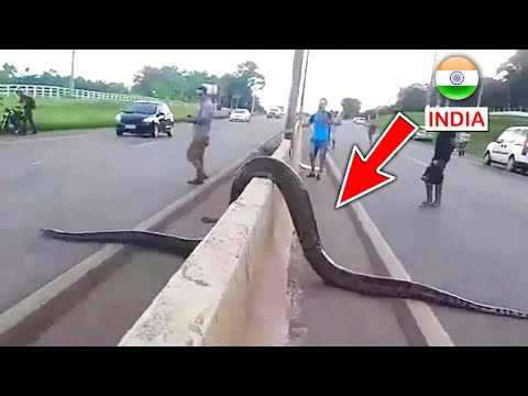 Top 10 Biggest Snakes In The World