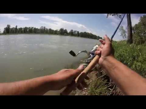 Urban Fishing. Bow River, Alberta.  High Flow And Big Trout
