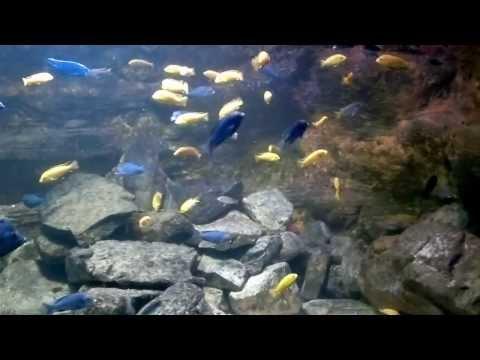 Zoo d'Anvers très beau parc animalier cette vidéo représente toute notre visite.