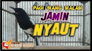 Download 🔴 Pancingan Kacer Bikin Lawan Gacor Dor Pagi Siang Malam    Jamin Terampuh
