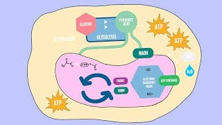 CELLULAR RESPIRATION SONG | Science Music Video