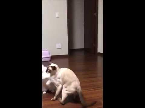 つりざおタイプ猫じゃらし YouTube用