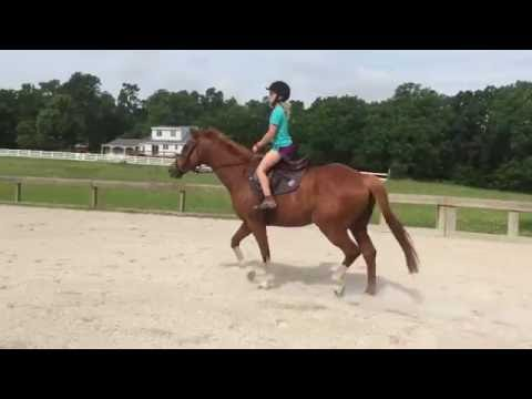 Versailles Trot with Beginner Rider
