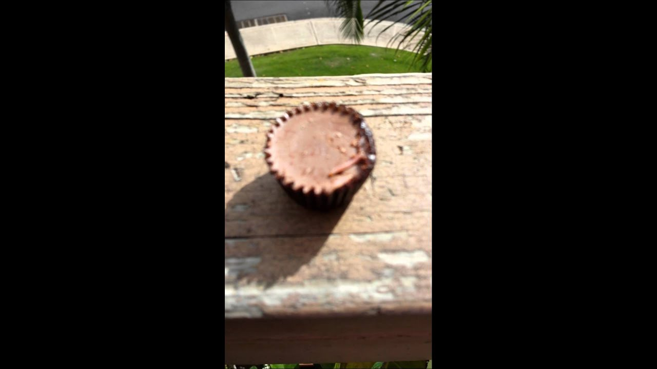Worms in the Reeses pesnut butter cup - YouTube