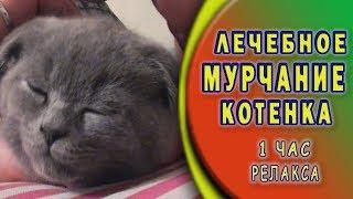 Лечебное кошачье мурлыканье 1 час