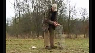 Cage Trapping - Landmark Rabbit Management