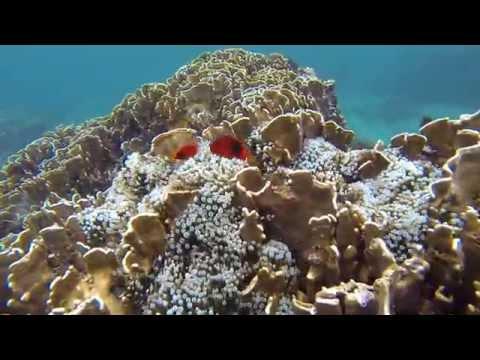 Snorkeling in Pulau Weh, Sabang, Aceh, Iboih, Sumatra Indonesia 2014