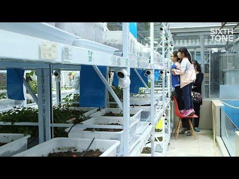 Shanghai's Edible Rooftops