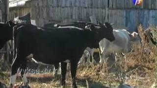Объявляется вакцинация домашних животных от инфекционных заболеваний