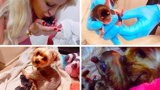 MY DOG GIVING BIRTH! (GRAPHIC) | Gigi