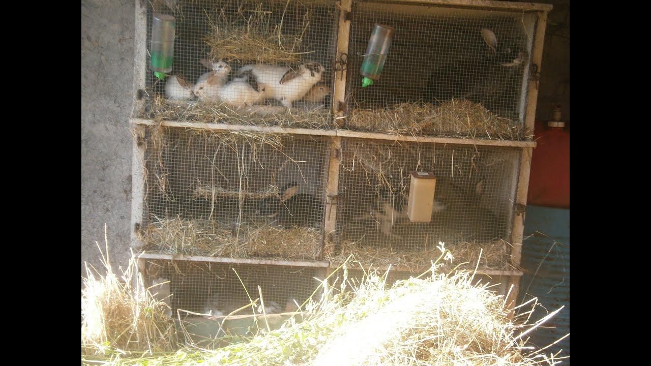 """Célèbre Les Lapins"""" :Comment commencer un élevage de lapin - YouTube MG25"""