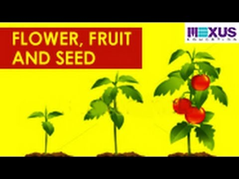 Flower Fruit And Seed Youtube