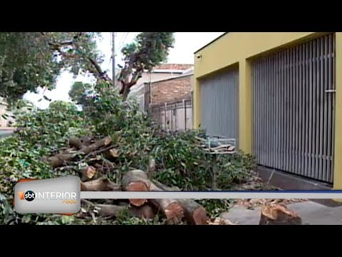 Poda drástica deixa árvores destruídas em Araçatuba