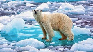 Арктика - интересные факты. Природа Арктики