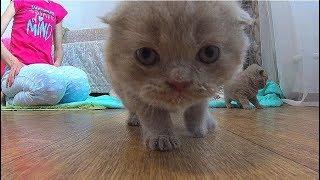 Маленькие и смешные котята и котики. Начали кушать. Очень милое видео. Cute kittens.