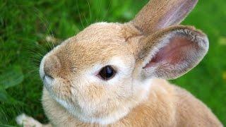 Кролики - живое украшение дома