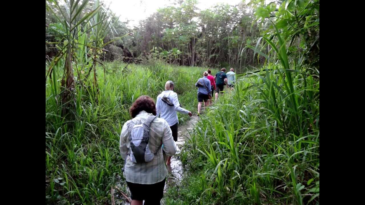 The Ayahuasca Experience Explained - Peruvian Amazon Rainforest Journey