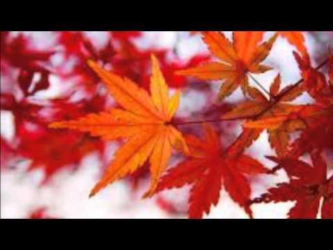 鳳飛飛又是秋天