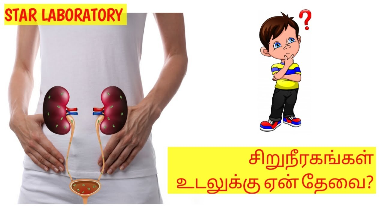 Why We Need Kidney Kidney Failure Symptoms In Tamil Urine Infection Tamil Urine Star Laboratory Youtube