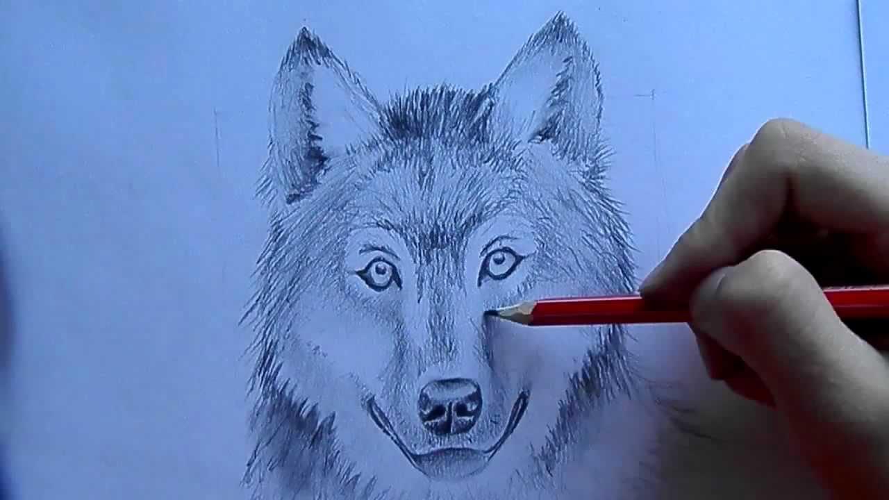 як малювати вовка ( how to draw a wolf ) - YouTube 184ae3e43fce5