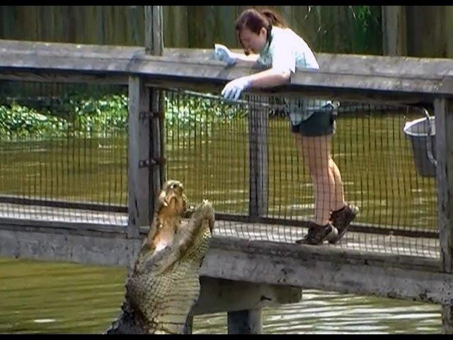 Feeding Alligators Raw Chicken North Myrtle Beach Alligator Adventure Youtube
