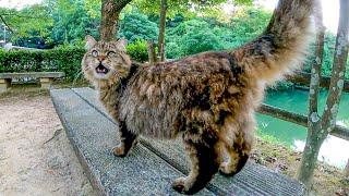 モフられにベンチに向かう公園の猫