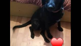 Собака Ариша ищет дом.Тамбов.