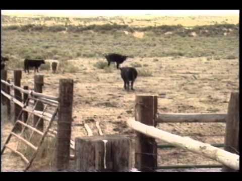 """El Caballo: The Wild Horses of North America"" (2001) - Short Version"
